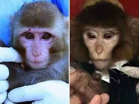 v3-Monkey2.