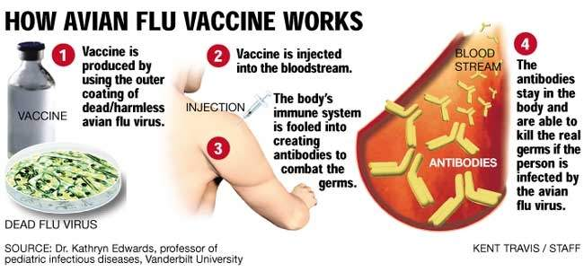 vaccine_369.