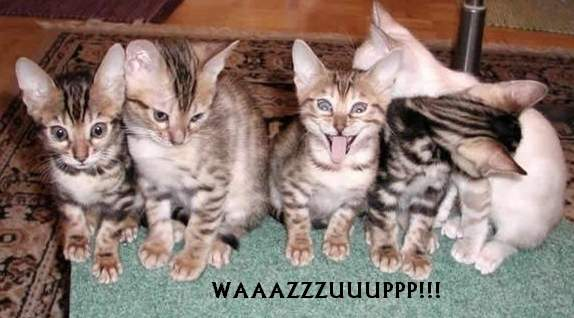 Waazup_Kitty.