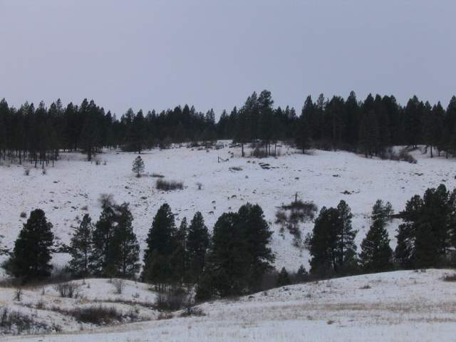 winter_2005_002_506.