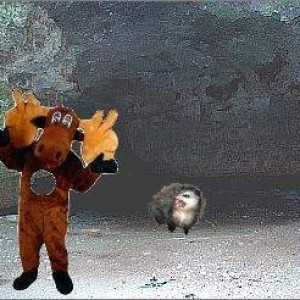 Moose at Bar Cave.JPG