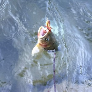 Fishing the PNW