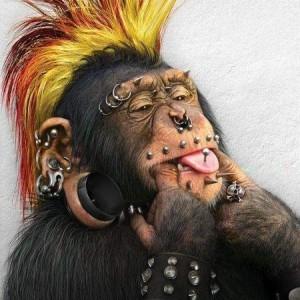 Funny-Monkey-02