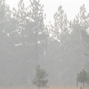 Smoke filled days Aug 2015
