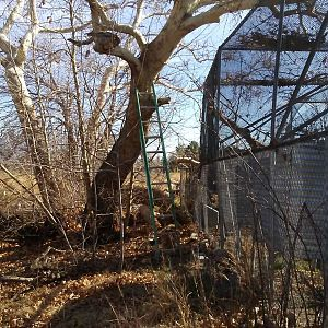 Flight_Cage_Leaning_Tree[1]