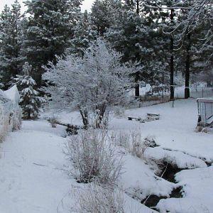 Morning Frost 25 Jan 2018