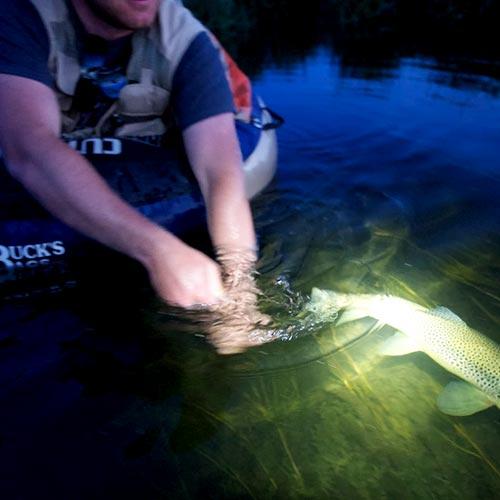 Fishing Light Survival Monkey Forums